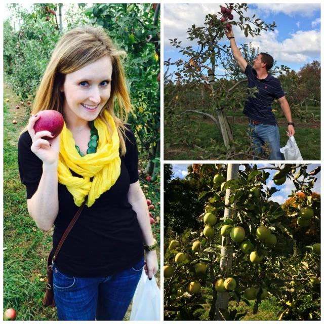Apple Picking at Beardsley