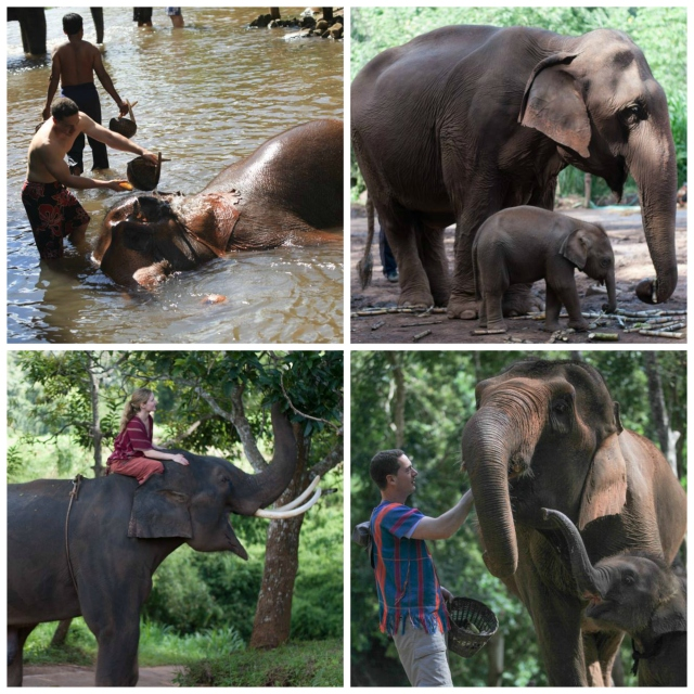 Our day as a Mahout at Patara Elephant Farm